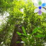 Preserving Trees & Livelihoods in the Chocó Rainforest